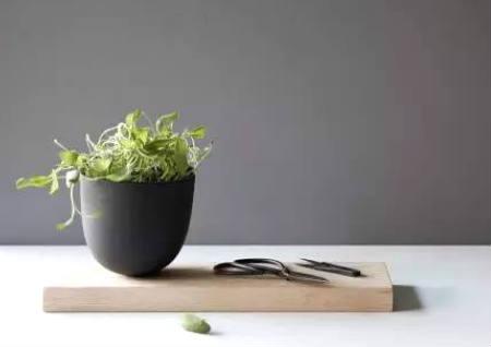 店铺植物摆放的风水讲究