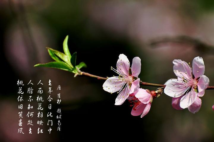 八字算桃花