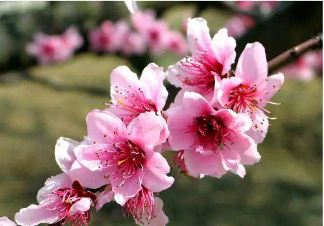 桃花劫是什么意思